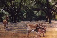 Deer Mural