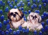 Texas Dawgs 2003